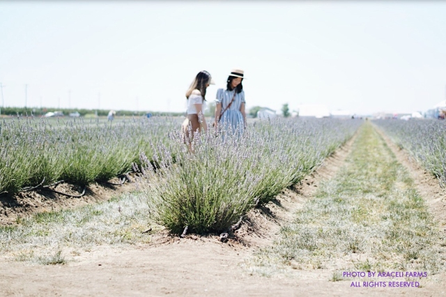 2 Women Enjoying Fields of Summer Lavender
