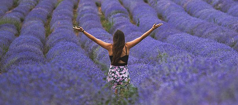 Lavender Events